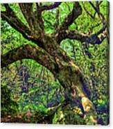 Likin Lichen - Blue Ridge Mountains Canvas Print