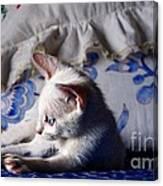 Lil Blue Canvas Print