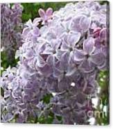 A Lighter Shade Of Lilac Canvas Print
