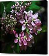 Lilac And Crabapple Canvas Print