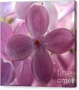 Lilac Bloom Canvas Print