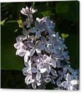 Lilac Branch Canvas Print