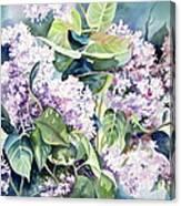 Lilac Delight Canvas Print