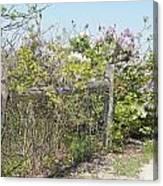Lilac Fence II Canvas Print