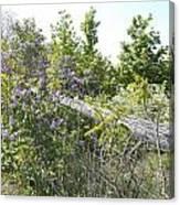 Lilac Fence IIi Canvas Print