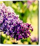 Lilac Festival Canvas Print