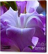 Lilac Flower Canvas Print
