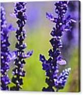 Lilac Heaven Canvas Print