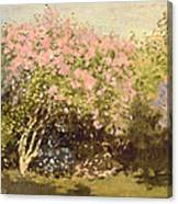 Lilac In The Sun, 1873 Canvas Print
