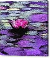 Lilac Lily Pond Canvas Print