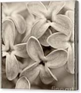 Lilac Macro Sepia Tone Canvas Print