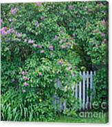 Lilac Season Canvas Print