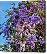 Lilac Tree Canvas Print