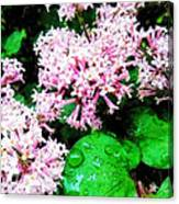 Lilacs After The Rain Canvas Print