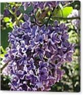 Lilac Beauty Canvas Print