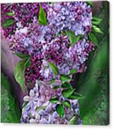 Lilacs In Lilac Vase Canvas Print