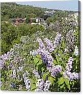 Lilacs On The Hill Canvas Print
