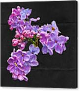 Lilacs - Perfumed Dreams Canvas Print