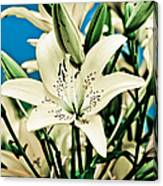 Lilies In White Canvas Print