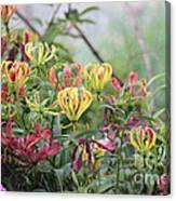 Lilies Of Color Canvas Print