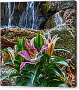 Lilies Of The Falls Canvas Print
