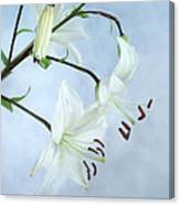 Lilies On Blue Canvas Print