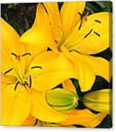 Lillies In Yellow Canvas Print