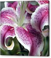 Lilly 1 Canvas Print