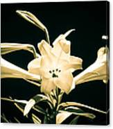 Lilly And Light Canvas Print
