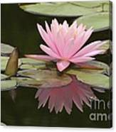 Lilly And Reflective Beauty Canvas Print