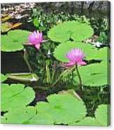 Lilly Pad In Hawaii Canvas Print