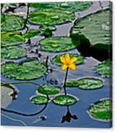 Lilly Pad Pond Canvas Print