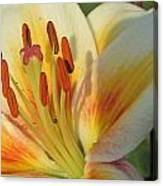 Lilly White 2 Canvas Print