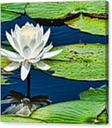 Lilly White Canvas Print