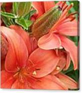 Lillys And Buds 3 Canvas Print