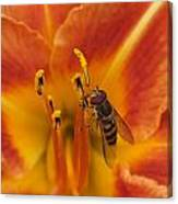 Lily And Bee Canvas Print