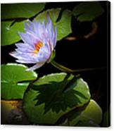 Lily And Shadow Canvas Print