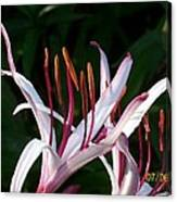 Lily Beauty Canvas Print