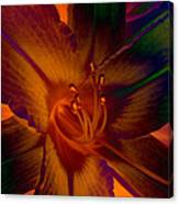 Lily Colors Canvas Print