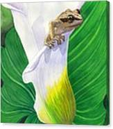 Lily Dipping Canvas Print