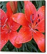 Lily Duet After The Rain Canvas Print