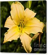 Lily For A Day Canvas Print