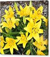 Lily Gathering Canvas Print