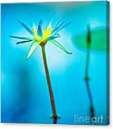 Lily In Blue Canvas Print