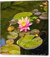 Lily In Pond Canvas Print