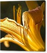 Lily In The Yard Canvas Print