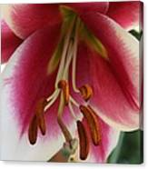 Lily Macro Canvas Print