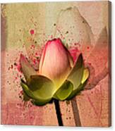 Lily My Lovely - S03d4 Canvas Print