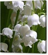Lily Of The Valley 3 Canvas Print