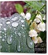Lily Of The Valley After The Rain Canvas Print